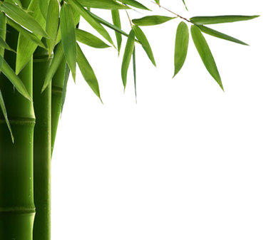 Bamboo (14).png
