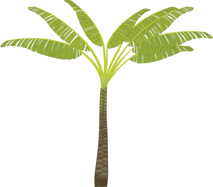 Palm tree, free PNGs