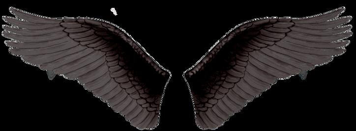 Wings-png-20