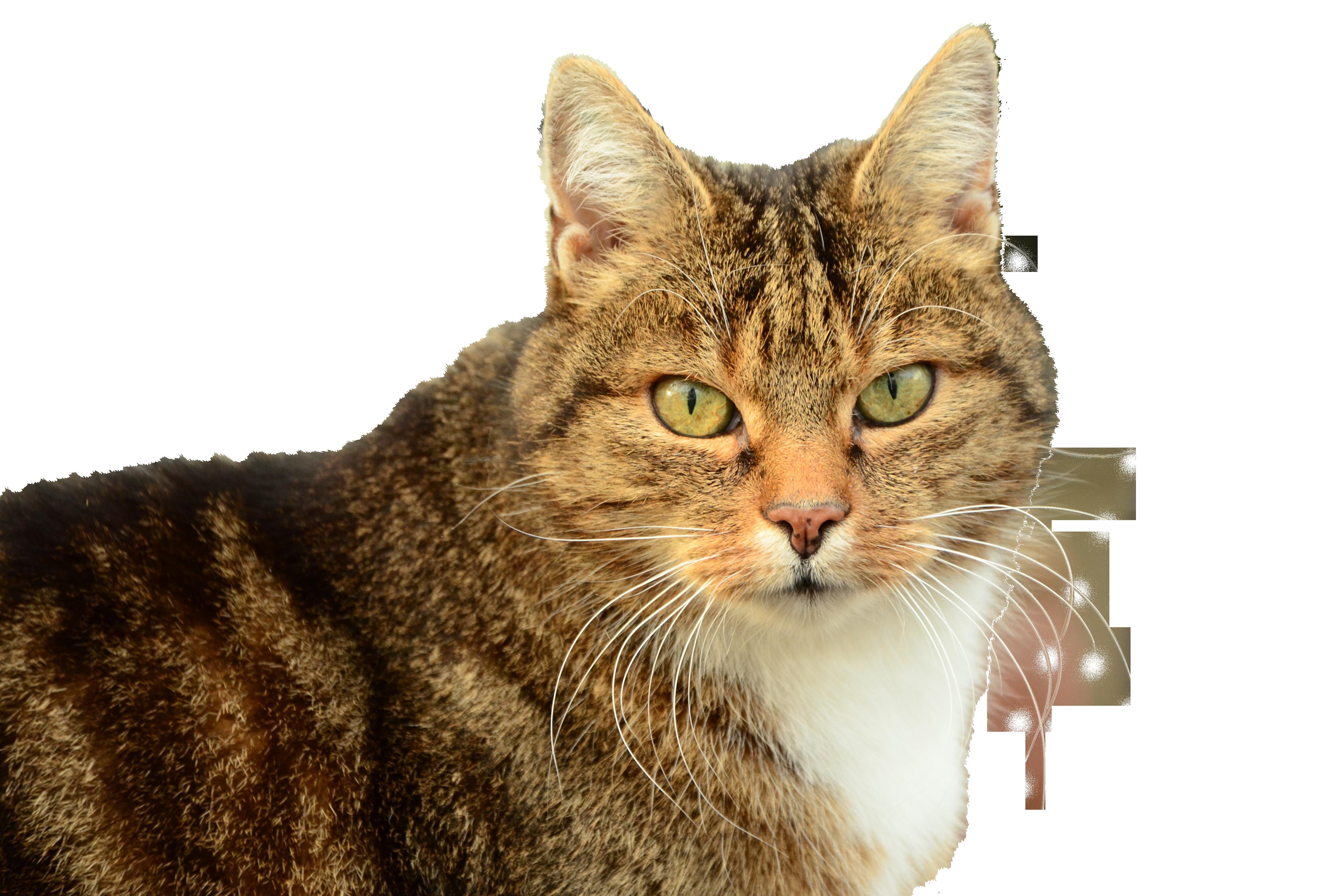 cat-1194404_Clip