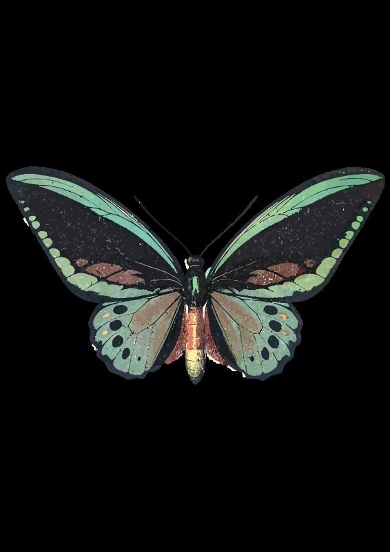Ornithoptera_priamus