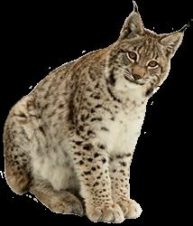 Lynx PNGs