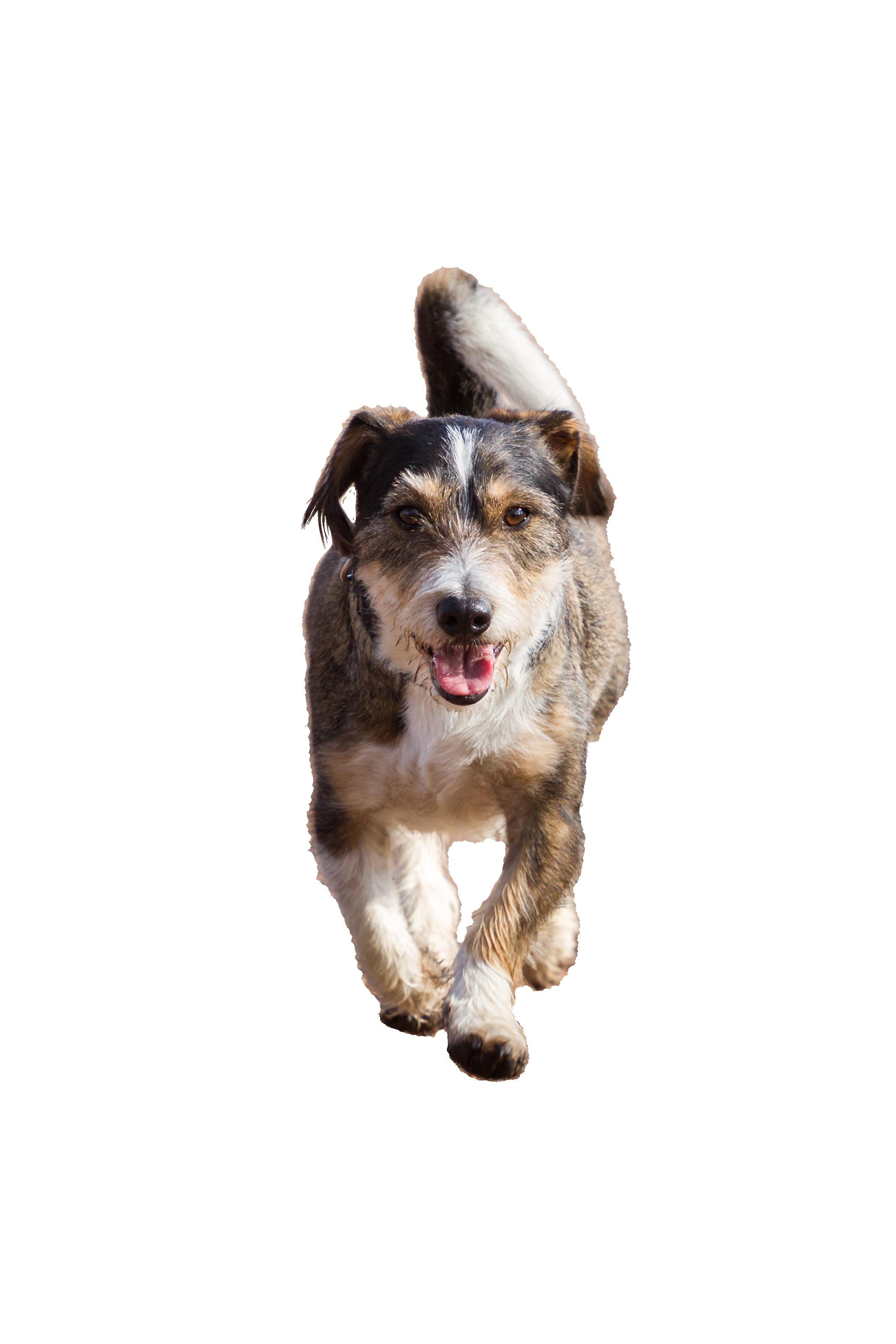 dog-1134500_Clip