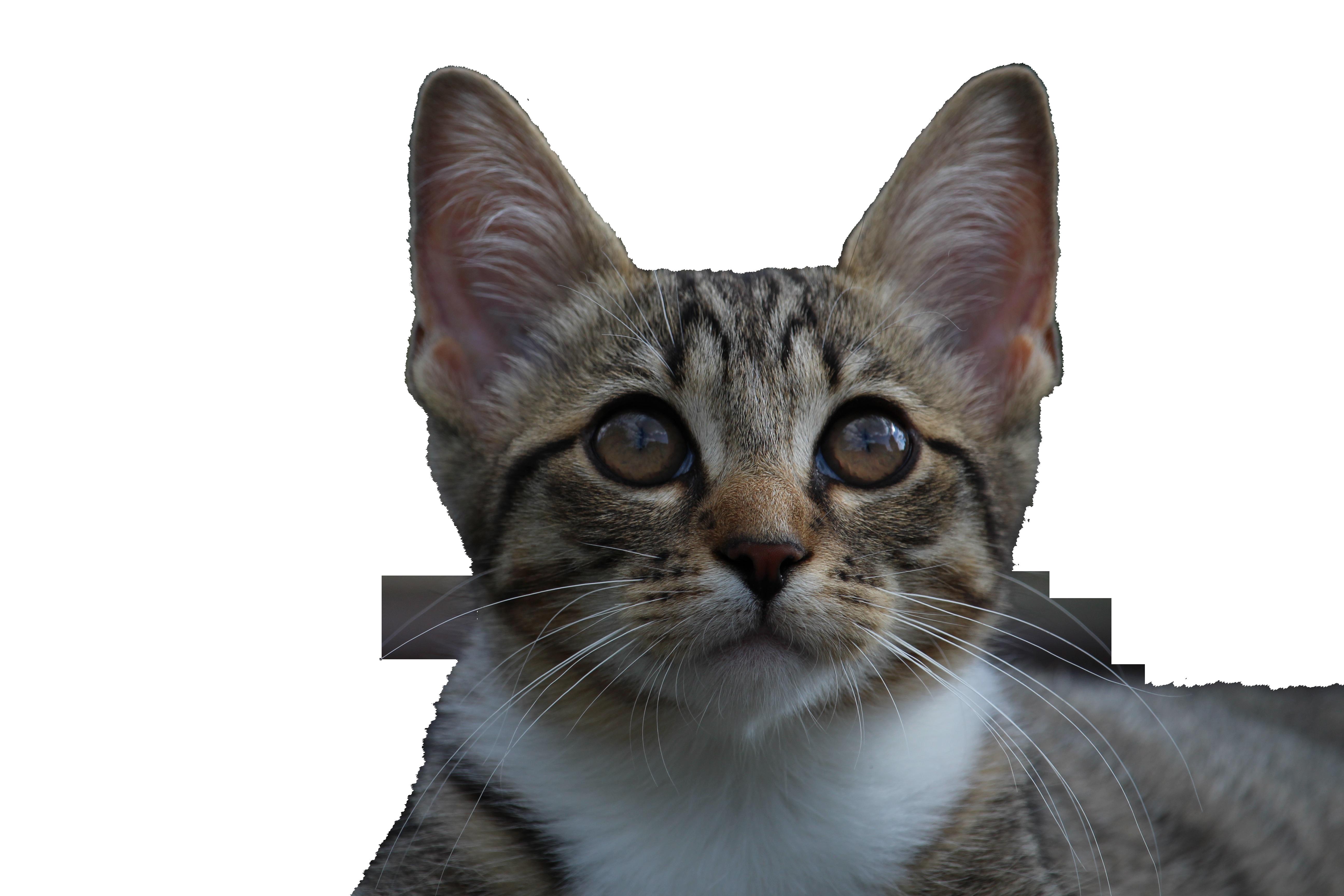 kitten-913182_Clip