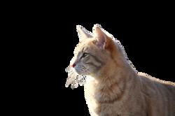 cat-1183086_Clip