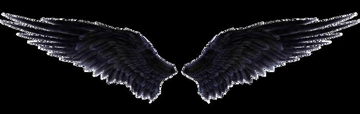 Wings-png-34