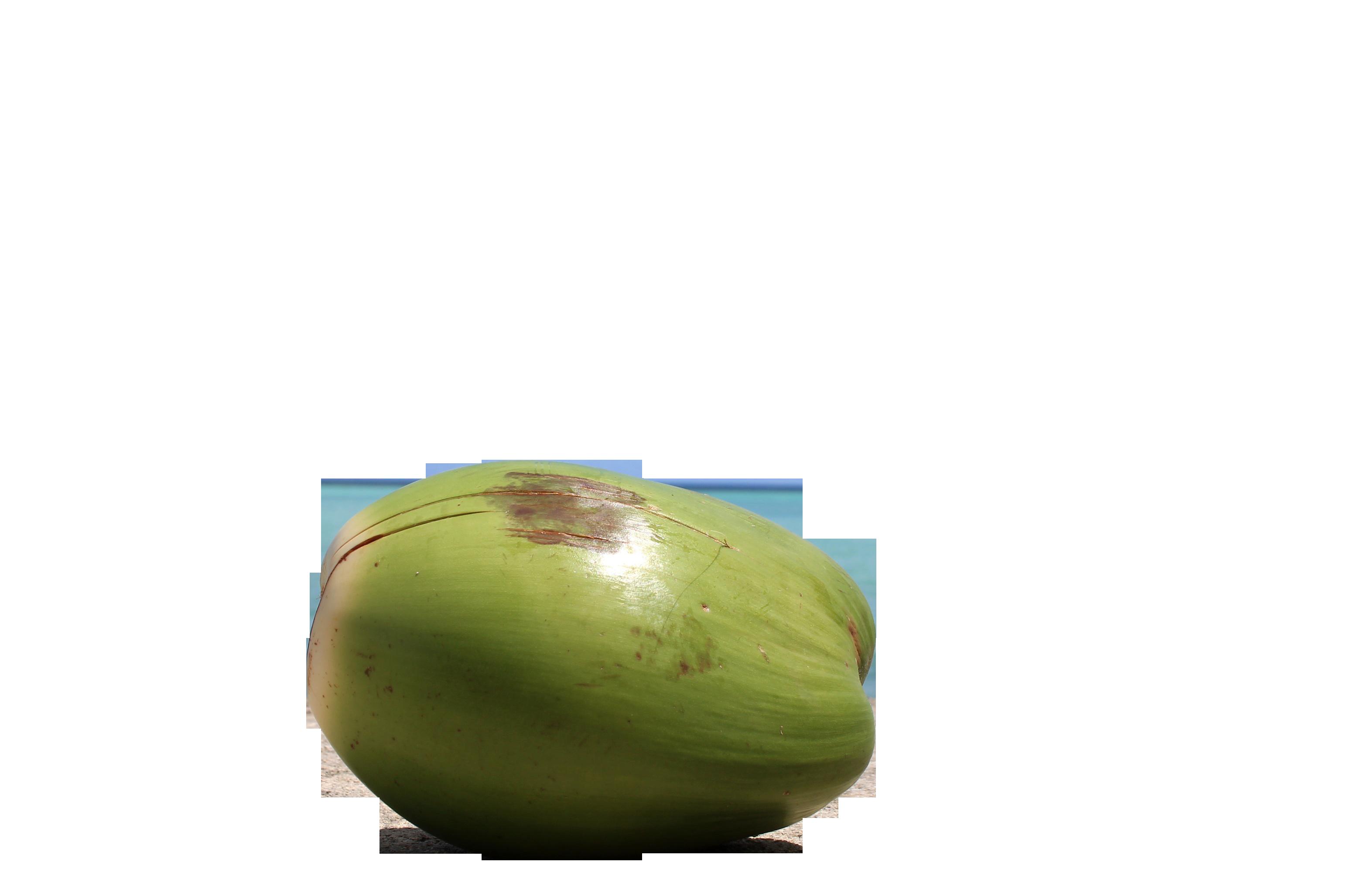 coconut-1179414_Clip
