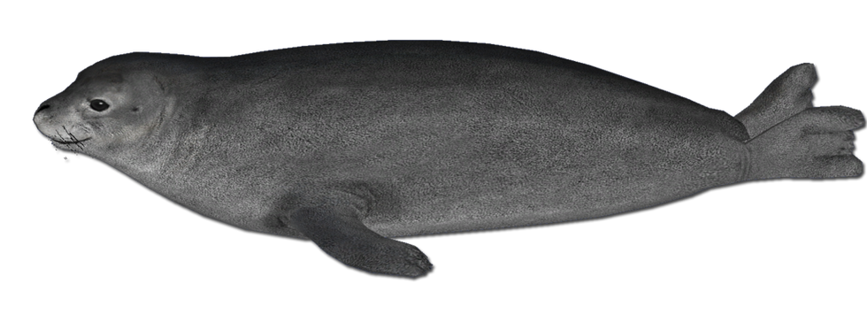 Seal PNG images