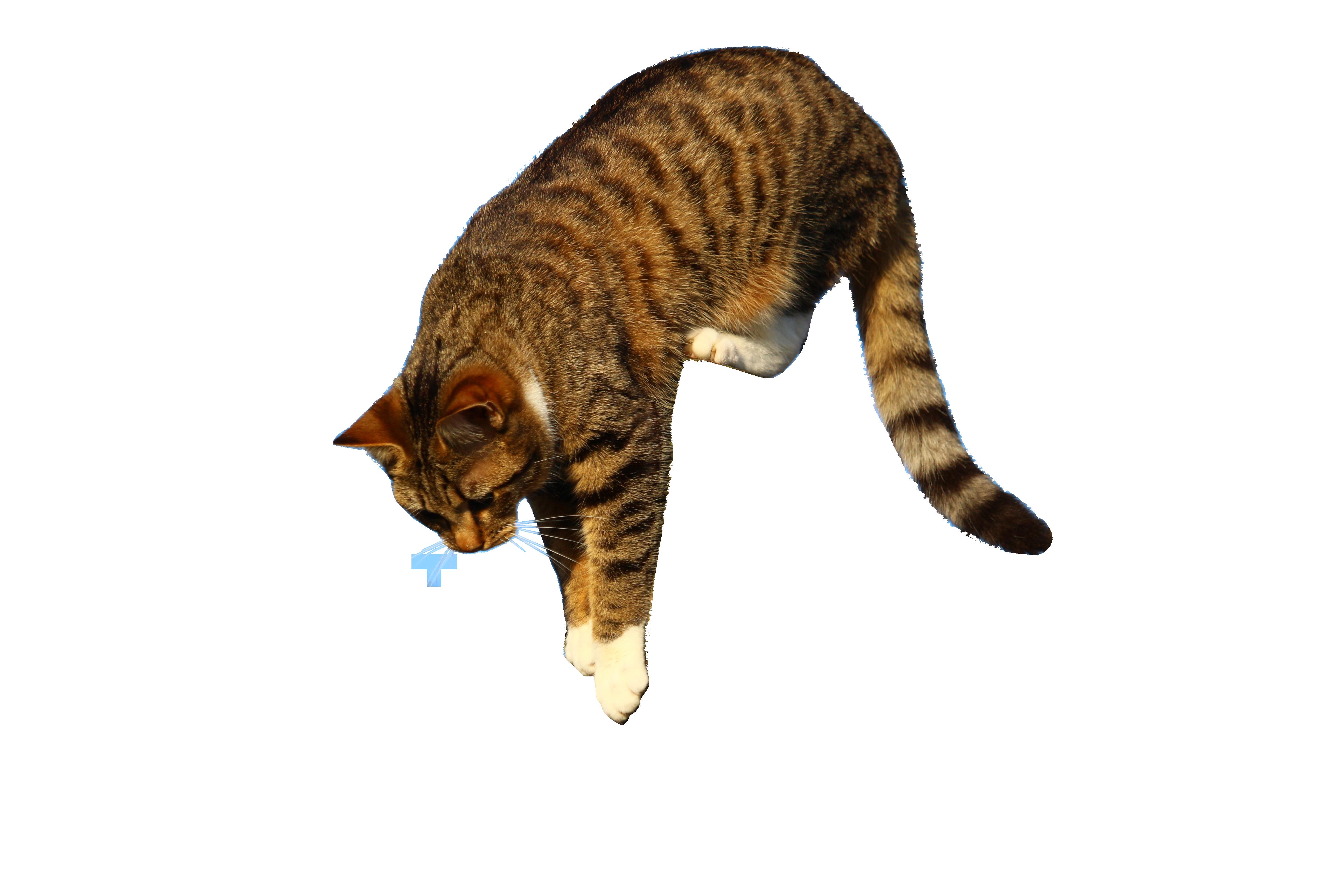 cat-1230262_Clip