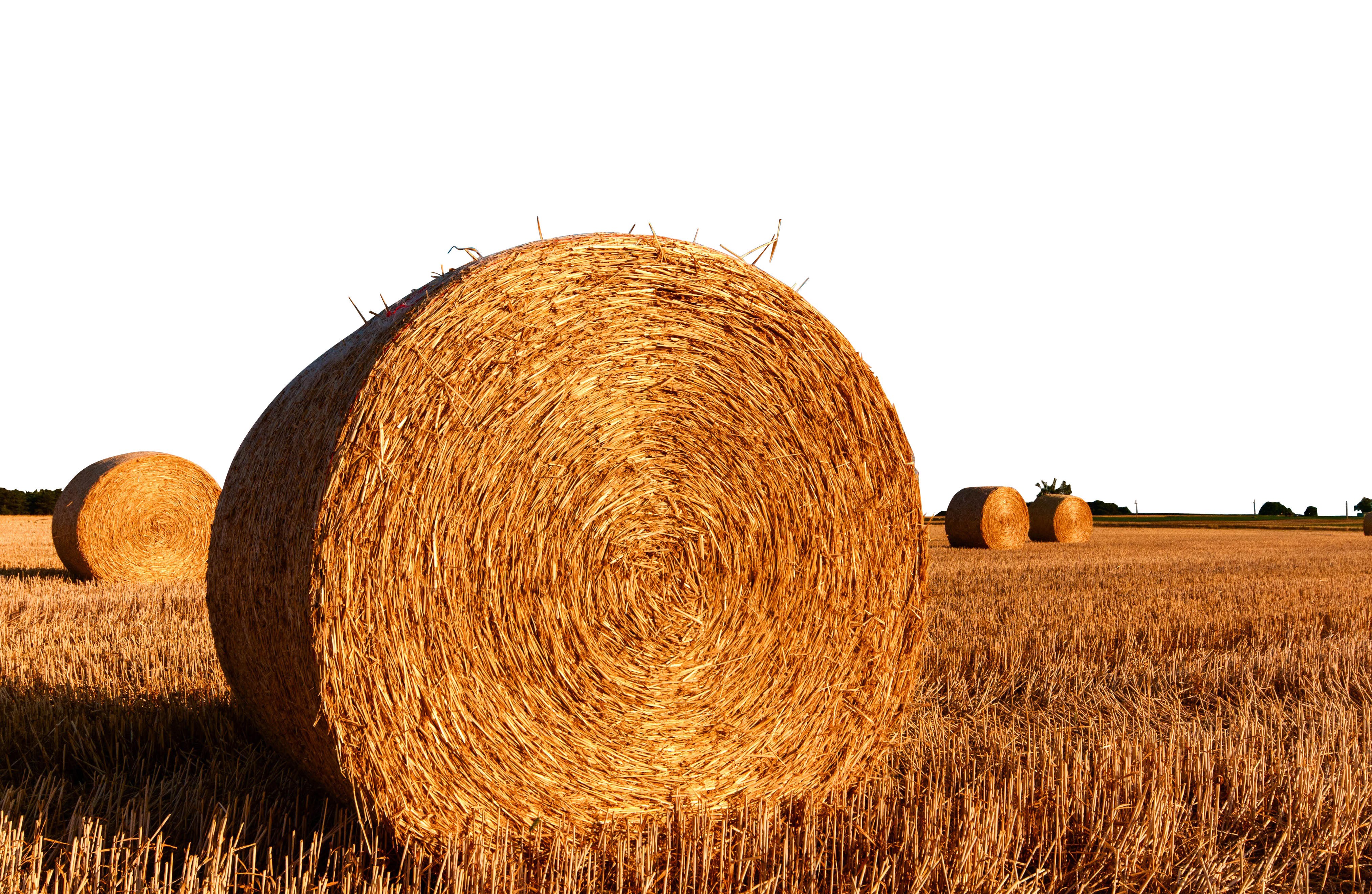 straw-bales-726976_Clip