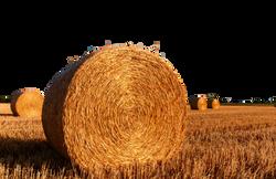 straw-bales-726976_Clip