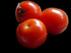 tomato-498721_Clip