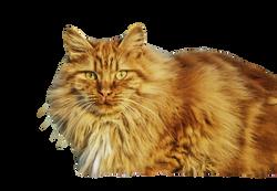 cat-67345_Clip
