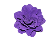 flower-2392854__340.png