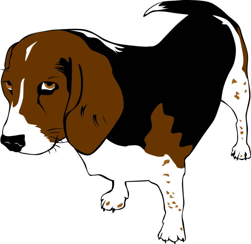 Gerald_G_Copper_the_Beagle