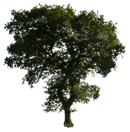 Here on Free PNGs you can browse through our complete collection of nature PNG images. all our PNGs are free to download and use. All's we ask for is a reference to our site.