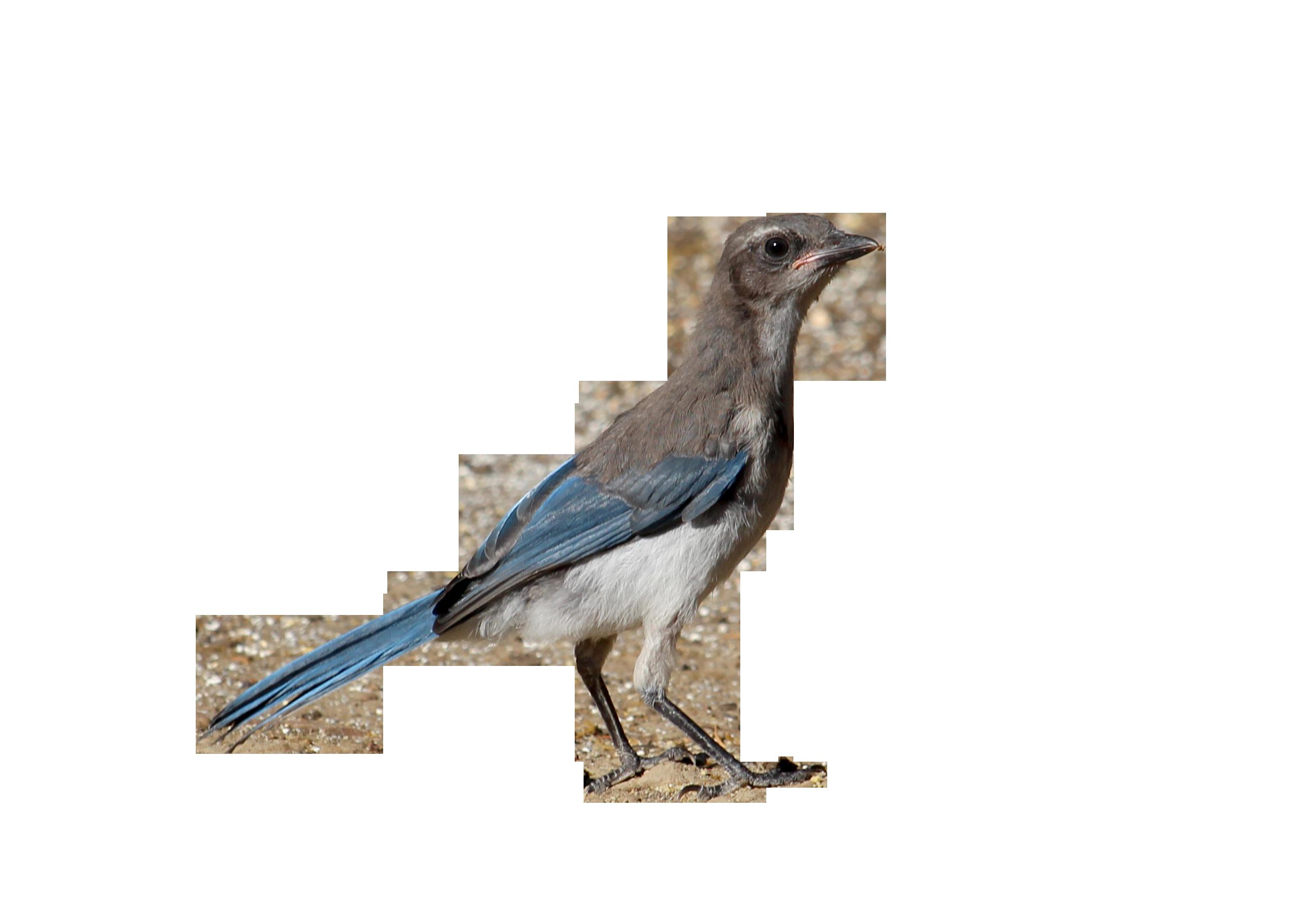 bird-853492_Clip