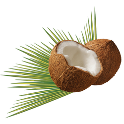coconut-979858_Clip