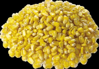 Corn, free PNGs