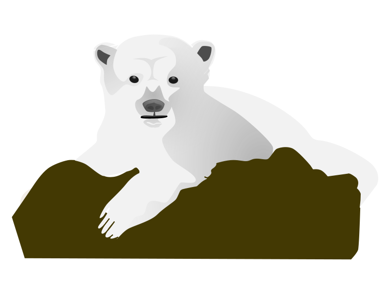 aitor_avila_knut_the_polar_bear