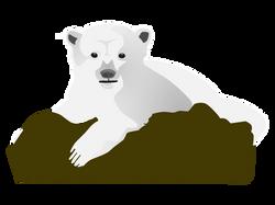 aitor_avila_knut_the_polar_bear