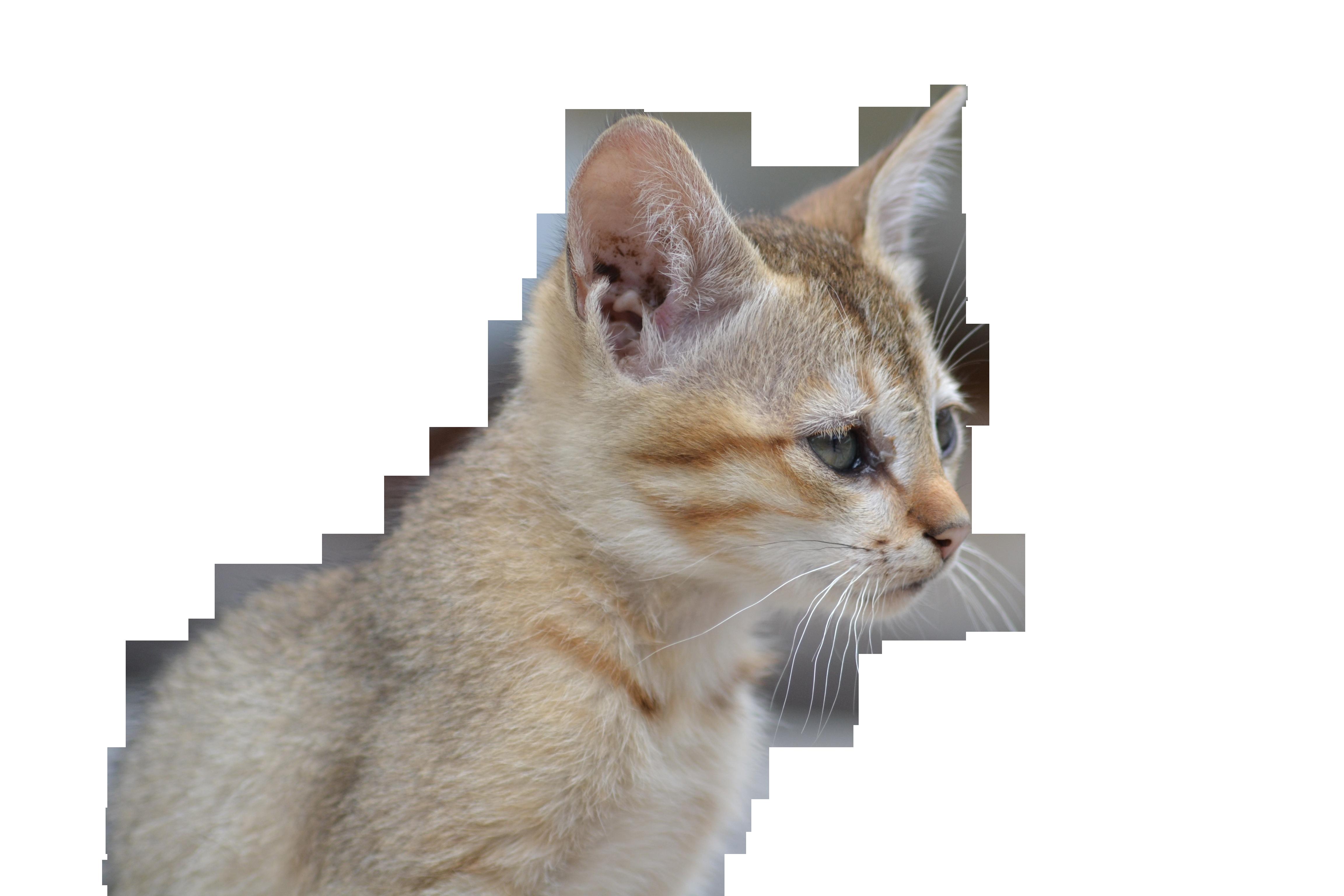 cat-1107450_Clip