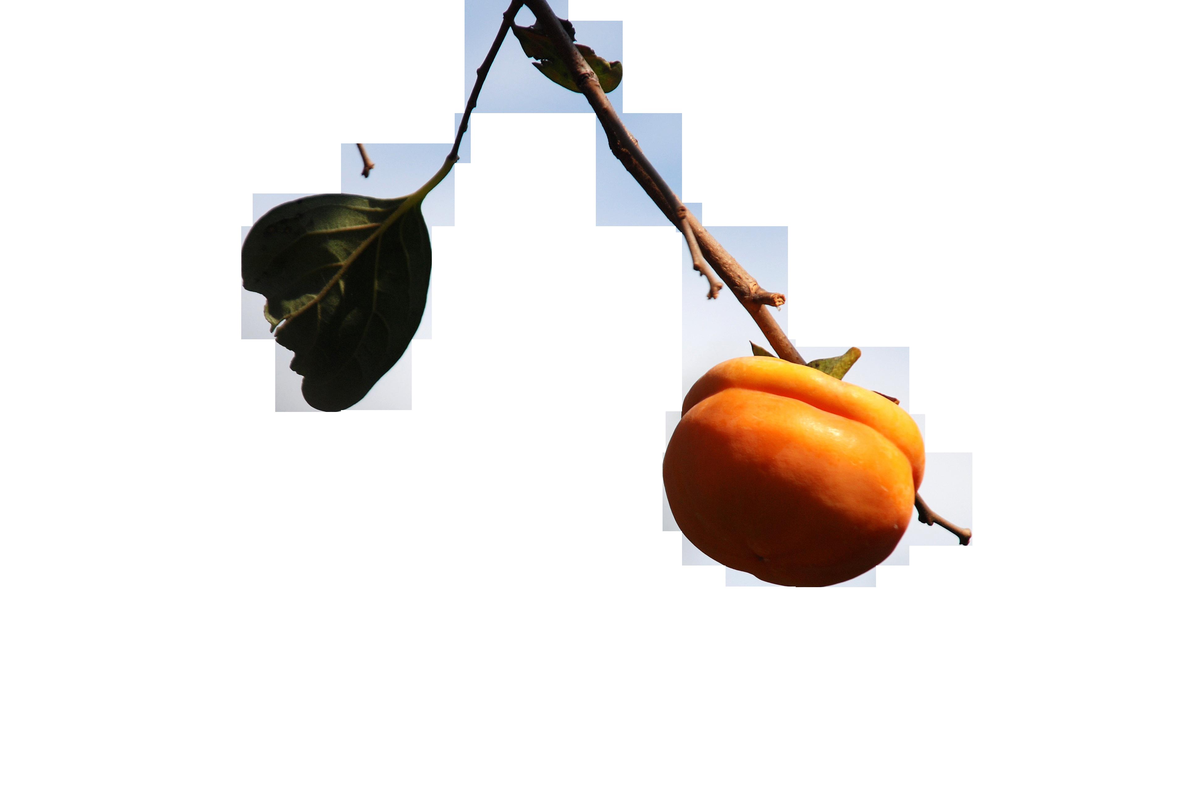persimmon-698198_Clip