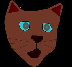 Machovka_cat2