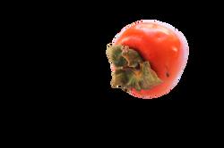 persimmon-1001804_Clip