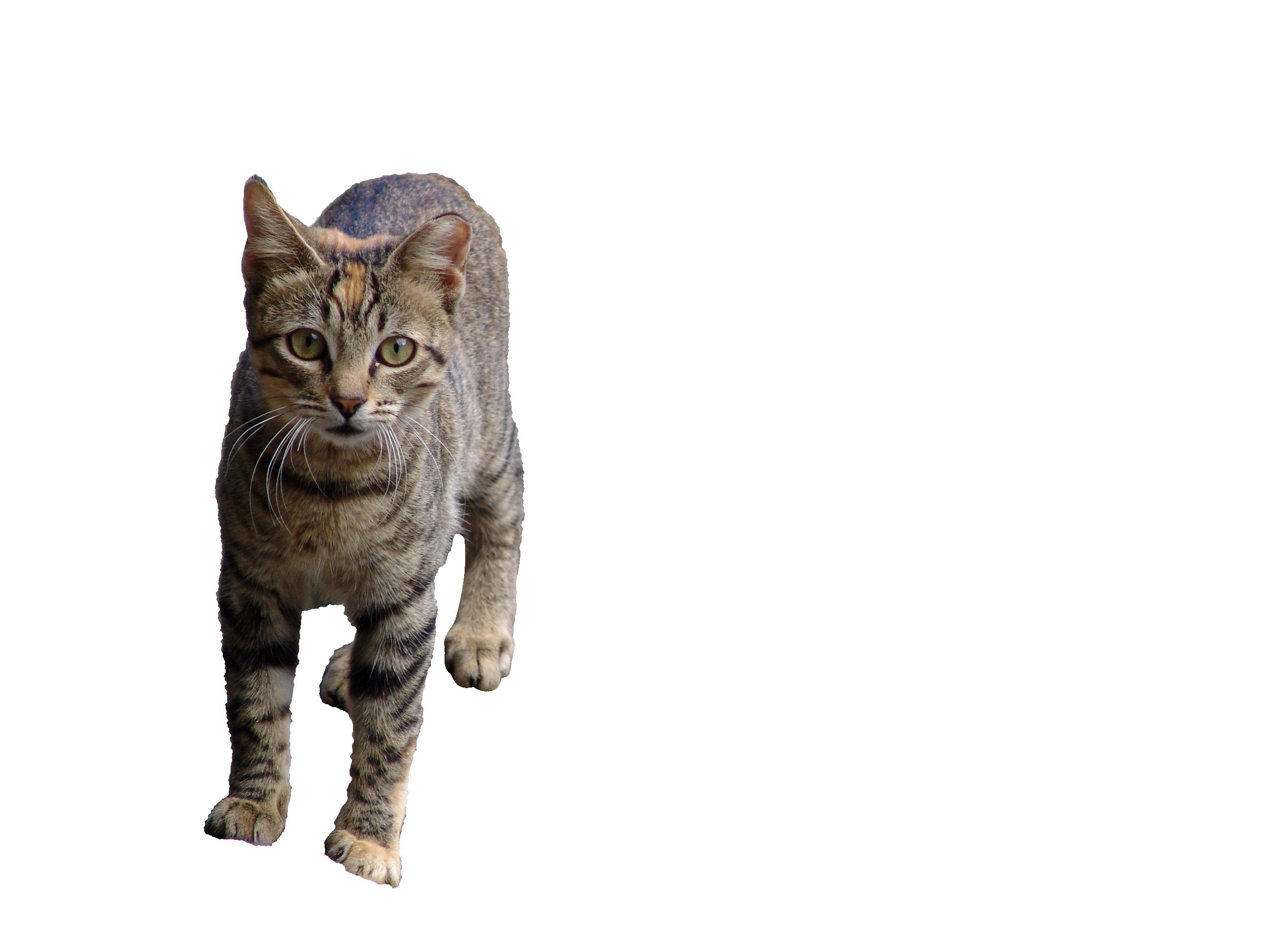 cat-1029087_Clip