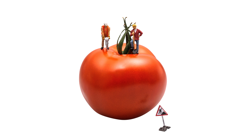 tomato-546989_Clip