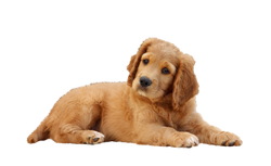 dog-785193_Clip