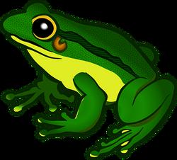 amphibian-1295172__340