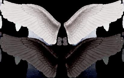 Wings-png-28