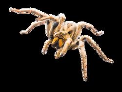 spider-348783_Clip