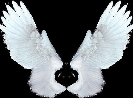 Wings-png-45