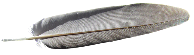 feather-3320727_960_720.png