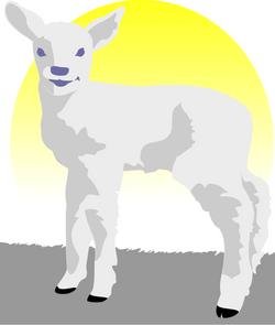 Peileppe_lamb