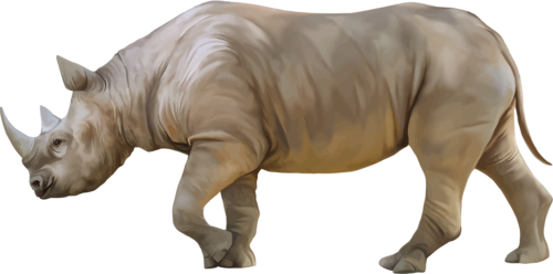 Rhino PNG images