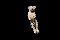 dog-1252073_Clip