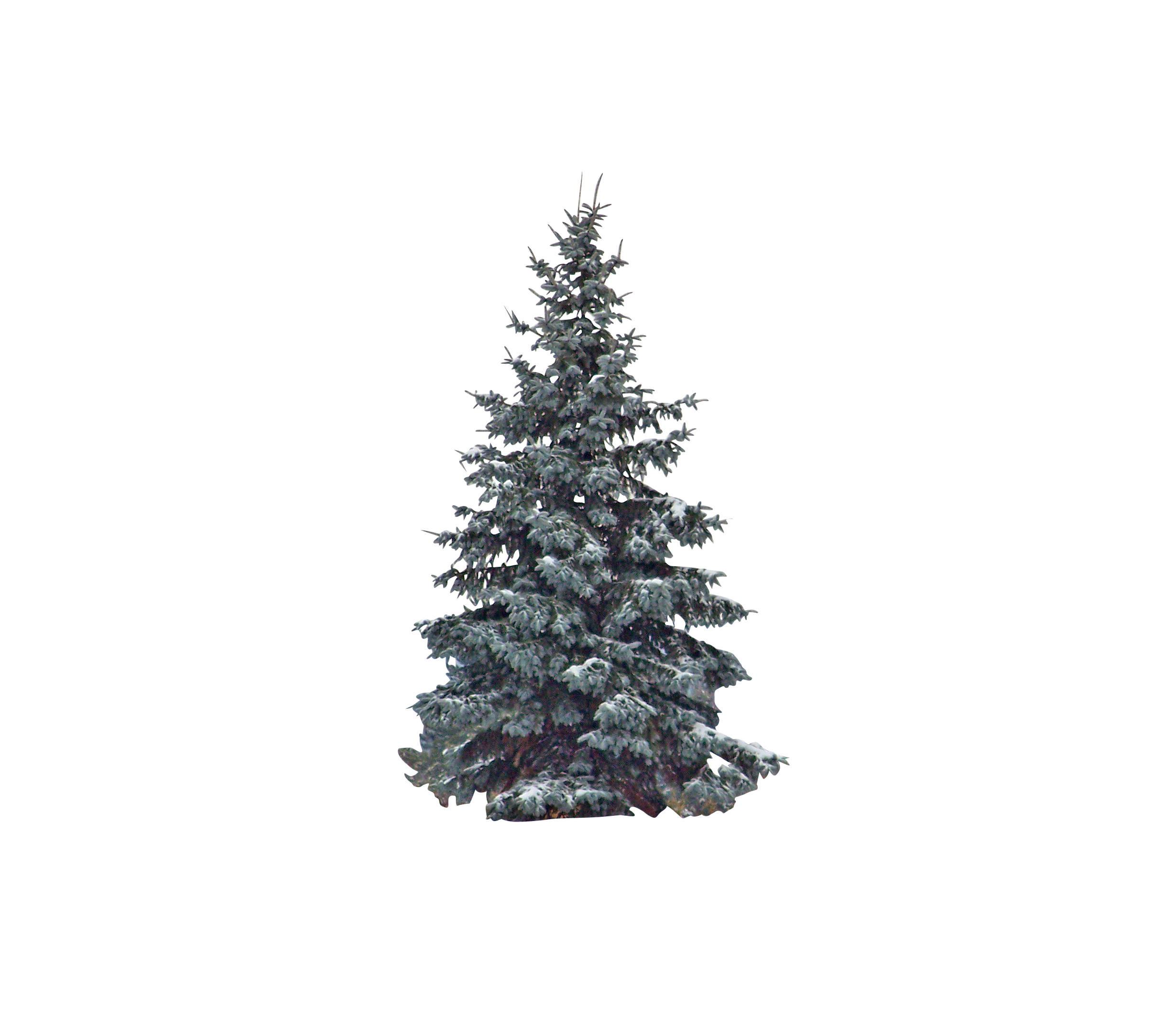 evergreen-18827_Clip