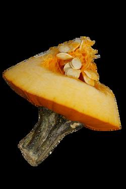 pumpkin-1004937_Clip