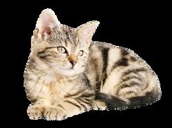 cat-1192026_Clip
