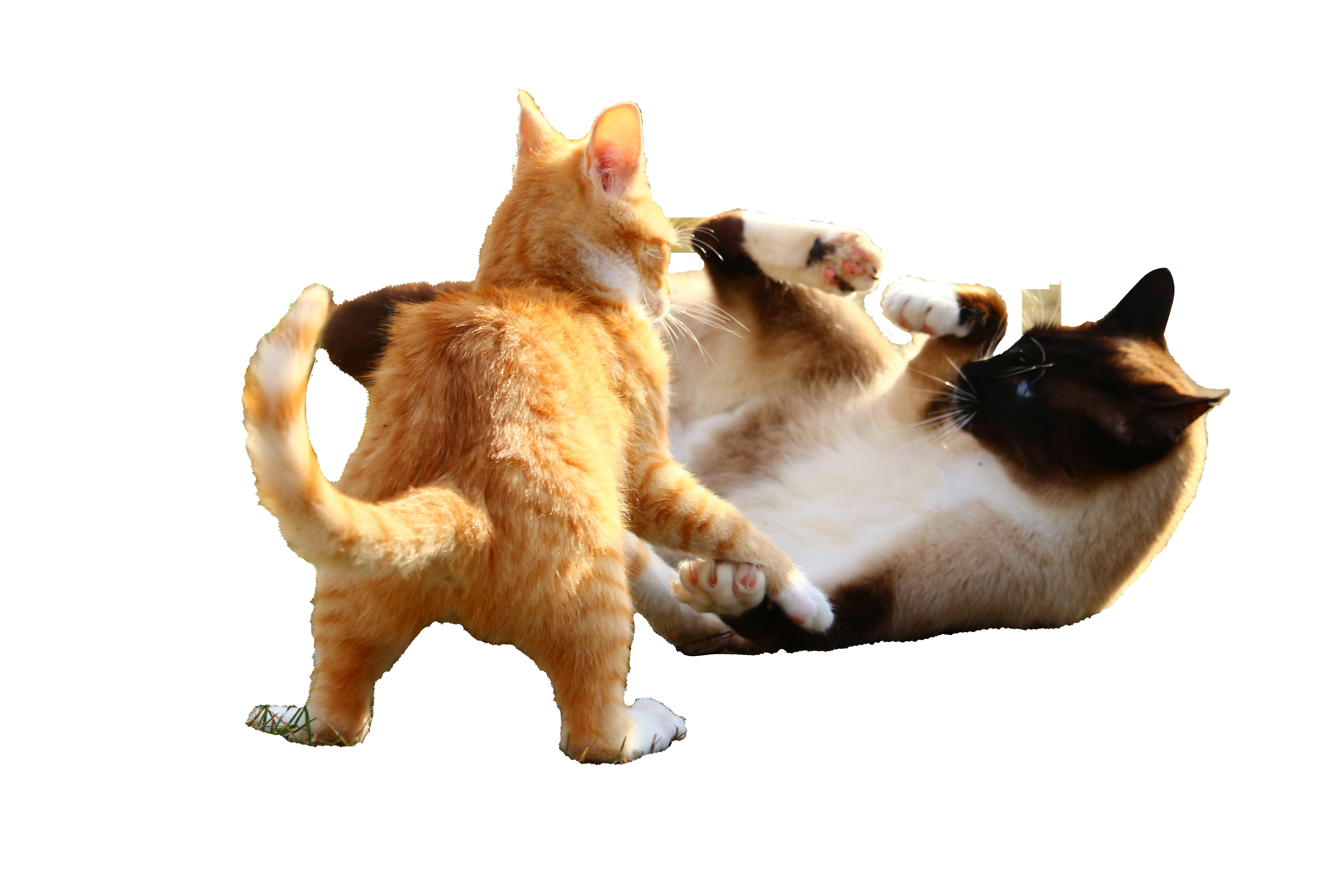 cat-1184736_Clip