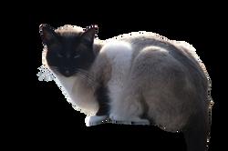 cat-1183161_Clip