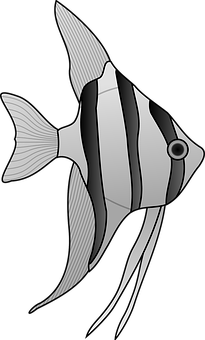 angelfish-24669__340