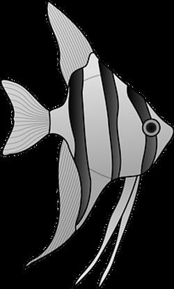 angelfish-24669__340
