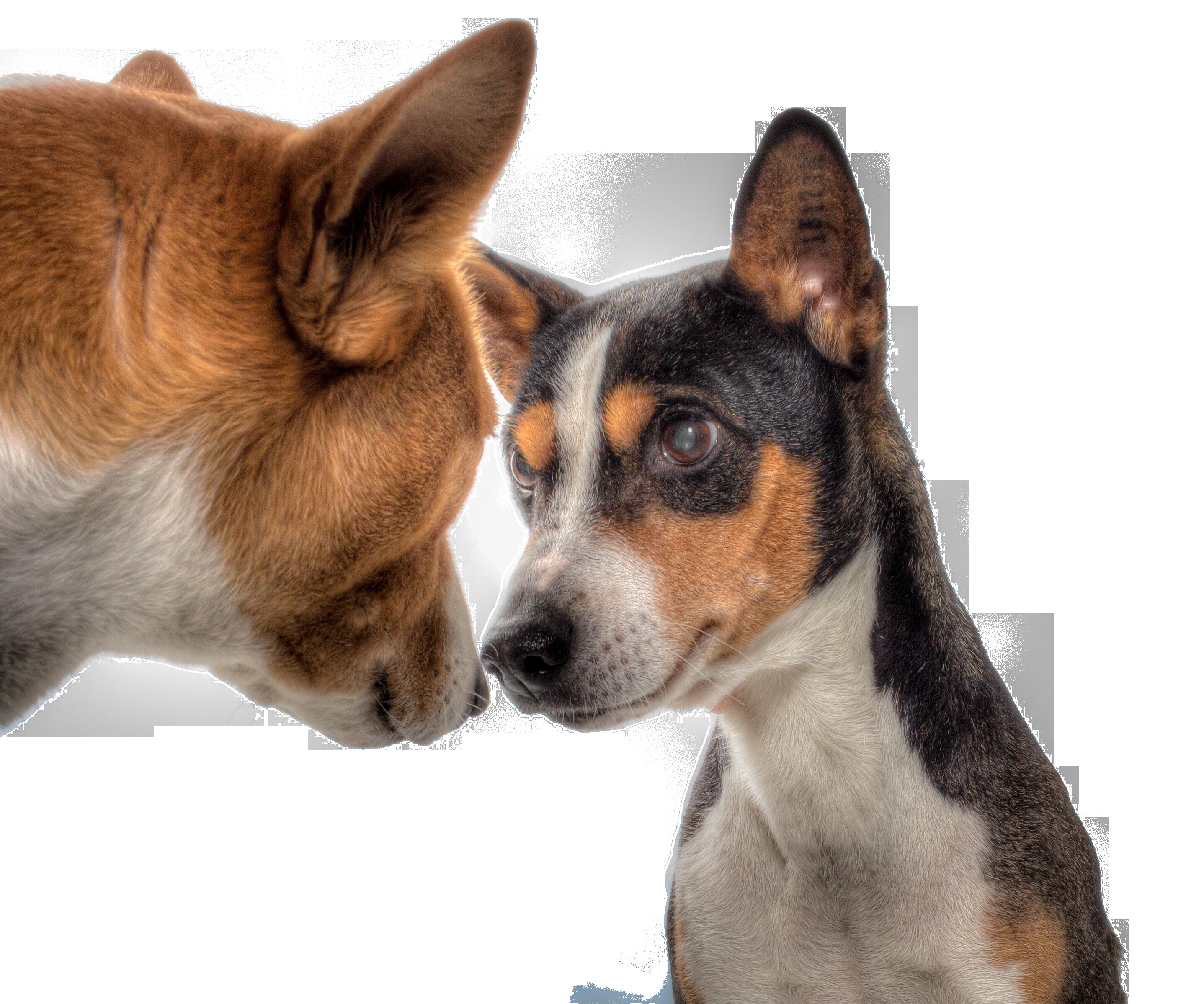 dogs-602890_Clip