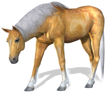 Free horse png images.