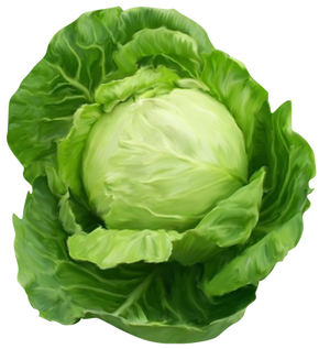 Cabbage, free PNGs